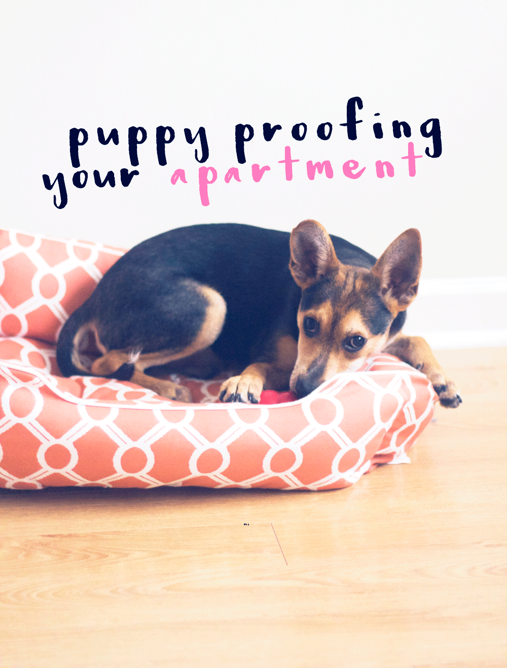 puppy proofing your place | midwestlovefest